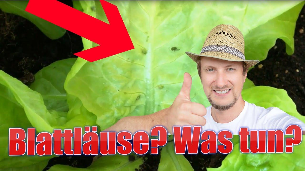hilfe gr ne blattl use auf salat sch dlinge bek mpfen youtube