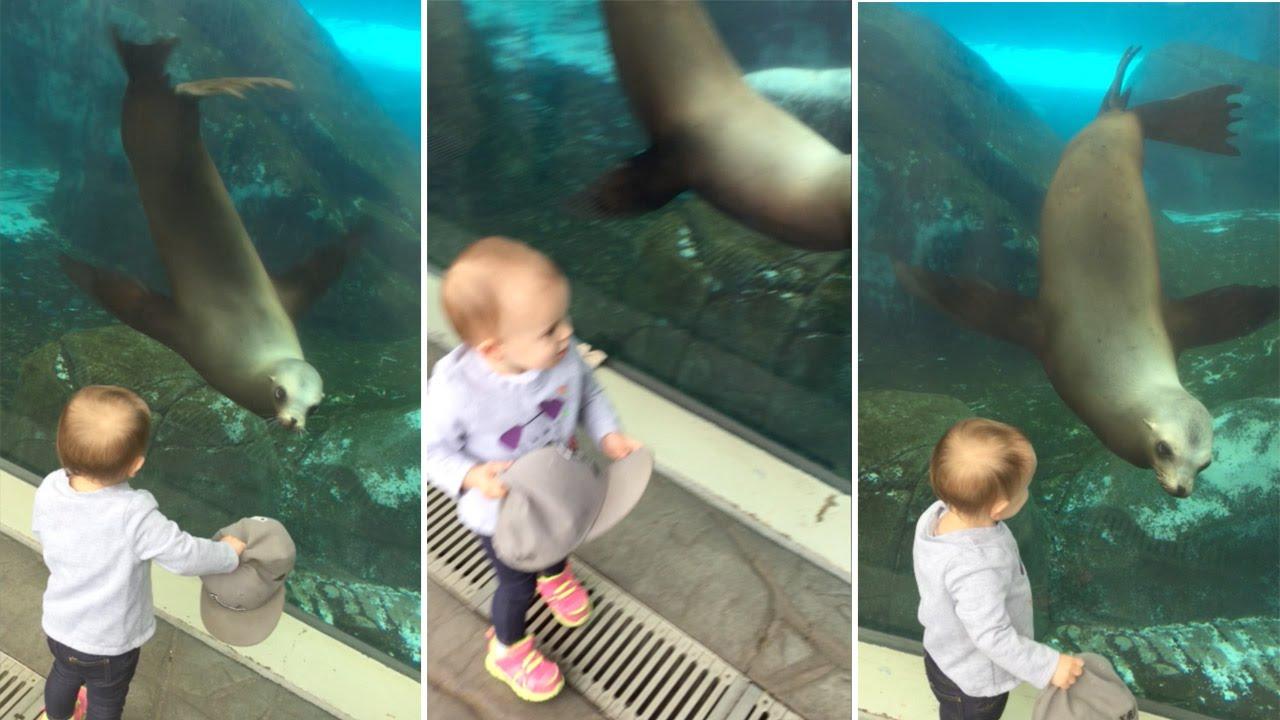 Lew morski bawi się z dzieckiem