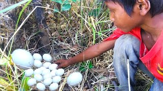 Amazing boys  Finding and Cooking a Lot of Bird's Eggs - How to Survive in the Jungle