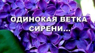 """песня """"Одинокая ветка сирени"""" исполняет Ирина Романова"""