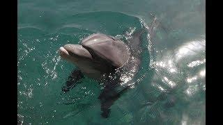 Дельфиний риф Эйлат