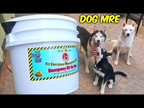 download Dog MRE (Meal Ready To Eat)
