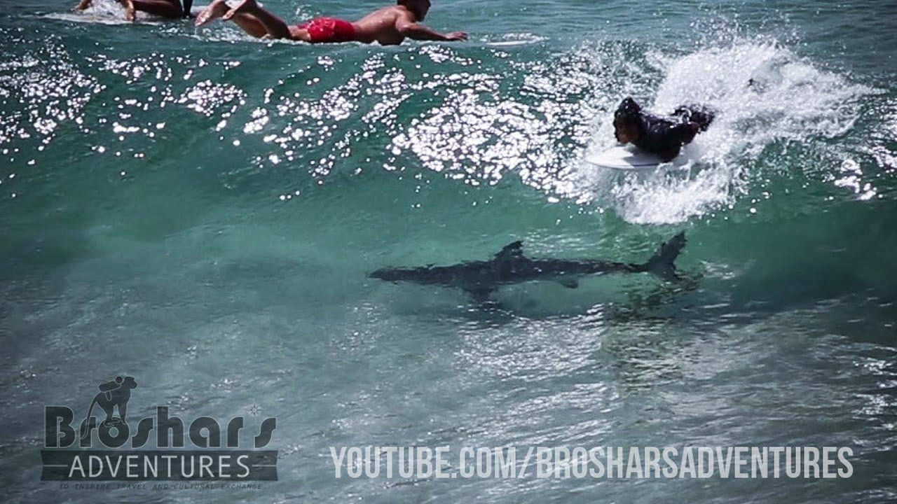 Shark Swims Into Wave And Under Oblivious Surfer In Close