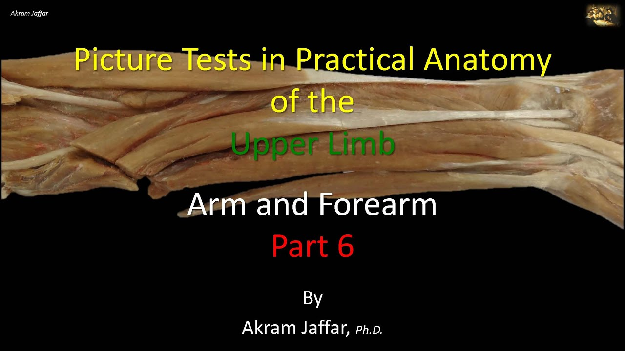 Picture tests in anatomy arm and forearm 6 - YouTube