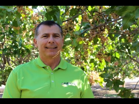 Update on the Sunset Review from American Pistachio Growers