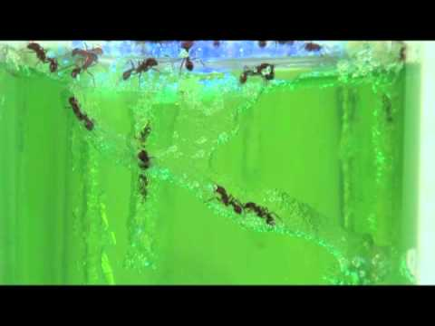 Ant Farm Revolution
