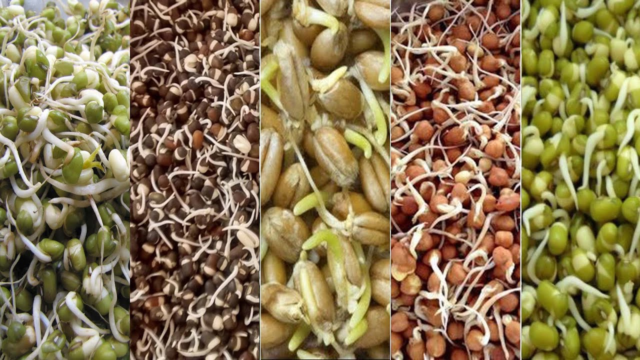 Eat loads of sprouts that can control hormones