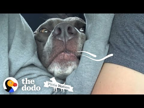Pittie Makes A Siren Noise To Get What He Wants | The Dodo Pittie Nation