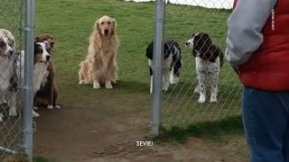 Dogs Wait Patiently For Their Names To Be Called