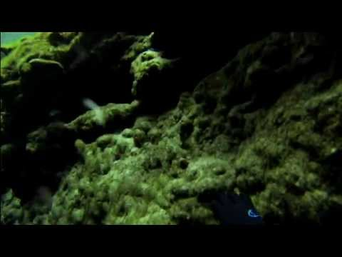 Diving the Springs of Northwest Florida