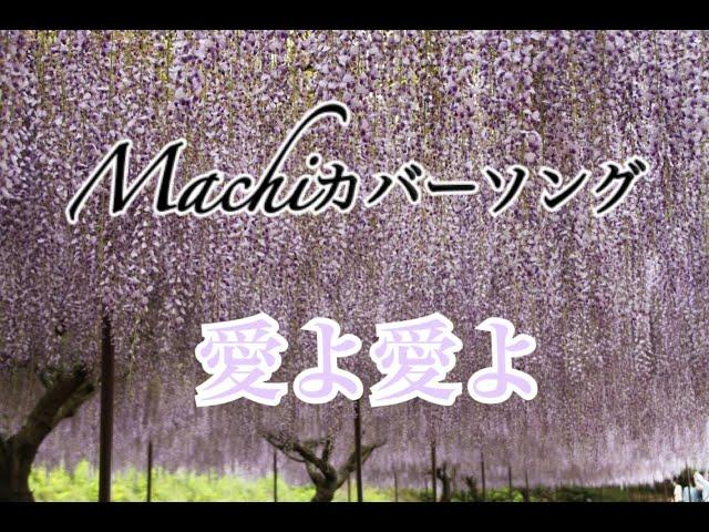 #38 愛よ愛よ/Cover by Machi