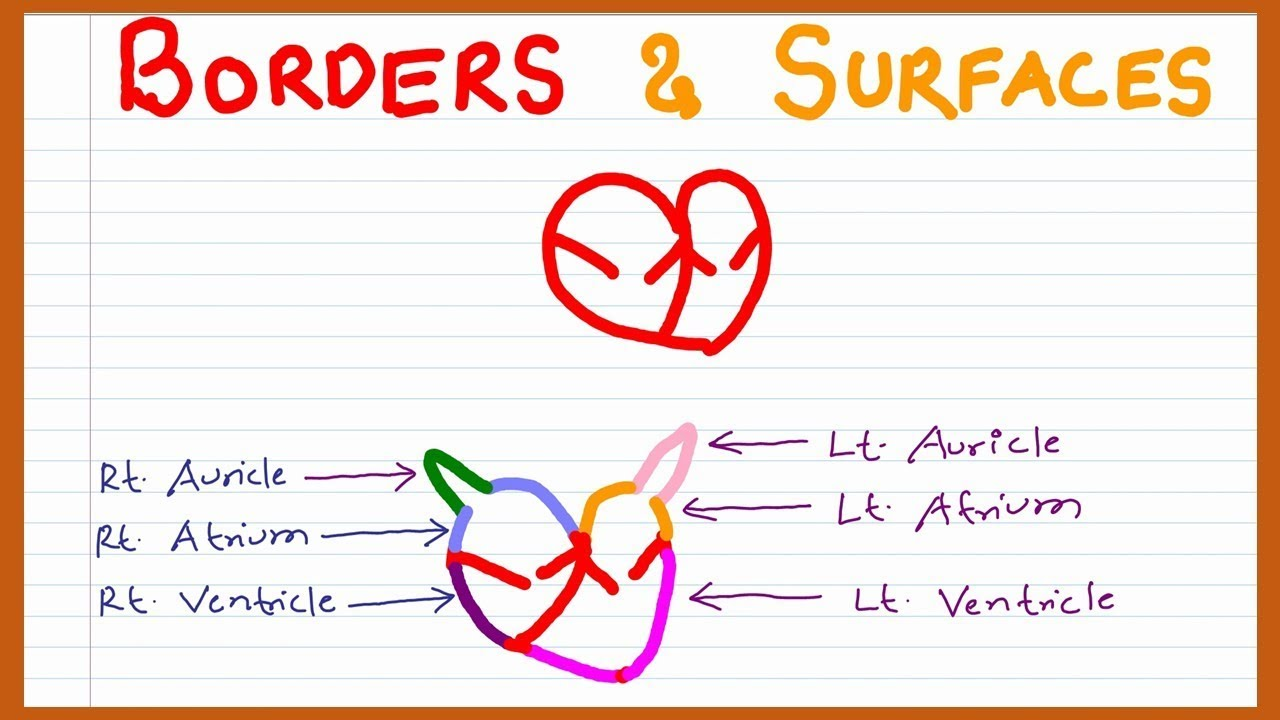 Mnemonic On Borders And Surfaces Of The Heart Youtube
