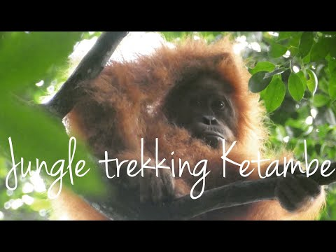 Jungle Trekking in Ketambe - Hidden corners of Sumatra Rainforest