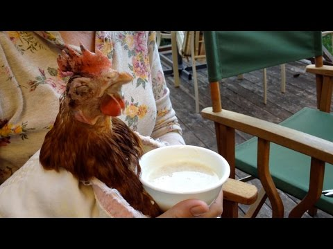 Eva the Rescue Chicken: The Power of Probiotics