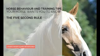 Petting Horses: The Five Second Rule