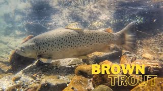 IS THIS PARADISE?? AMAZING Fishing for BROWN Trout [New Zealand]