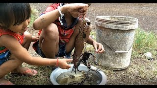Children Catch Crab At Rice Field  | Catch Crab At Countryside Natural Life