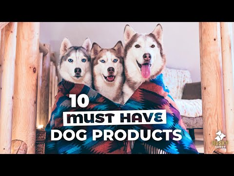 10 Home Products Every Dog Parent NEEDS | HUSKY SQUAD