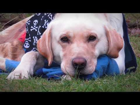 Marley the helpful dog | USEFUL DOG TRICKS ♿