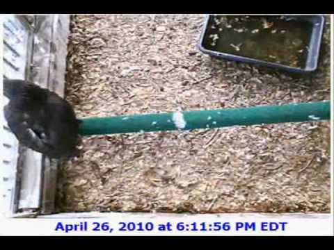 The Carolina Raptor Center Derek & Savannah Huntersville, NC 04/26/10