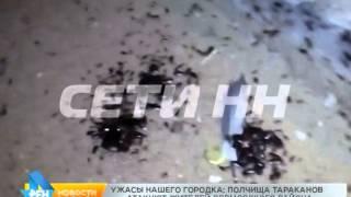 Кадры фильмов ужасов про нашествия насекомых стали реальностью в Сормовском районе