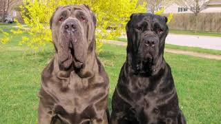 Самые популярные клички для собак больших пород  The most popular nicknames for dogs of large breeds