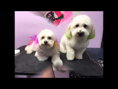Pet Hair Coloring by Pet Hospital's grooming Orange, Ca.