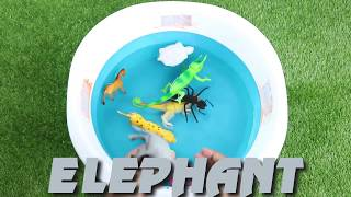 Farm Animals Fox pig, Forest Animals squirrel , Jungle Animals snake and more animals name for kids