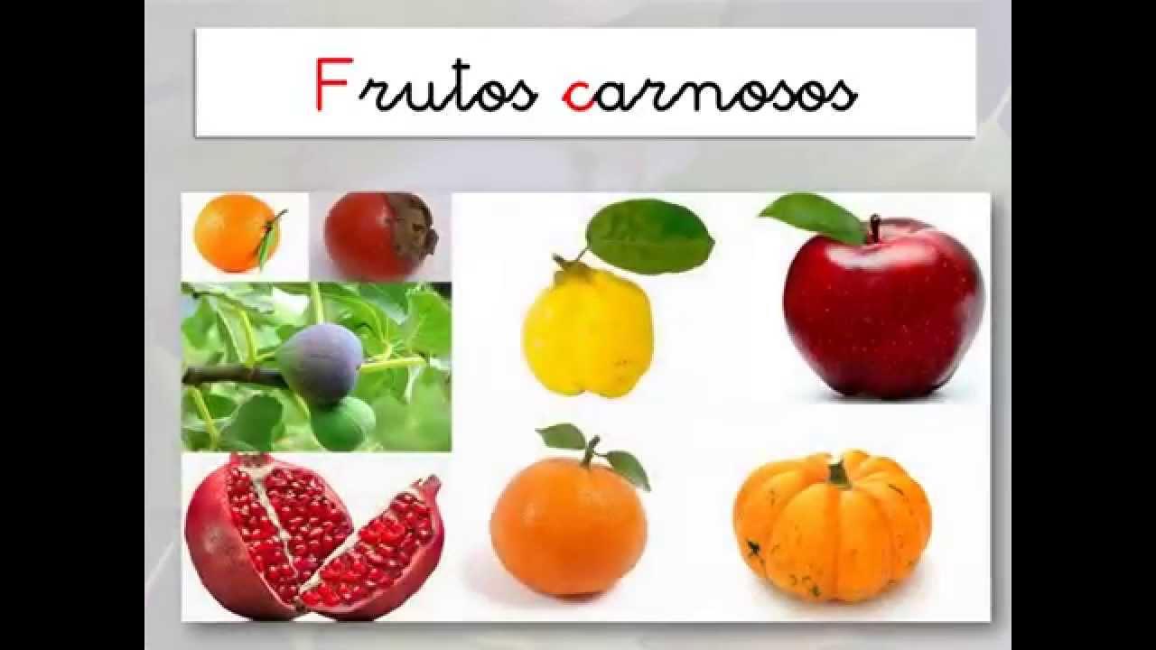 FRUTOS DE OTOÑO CARNOSOS - YouTube