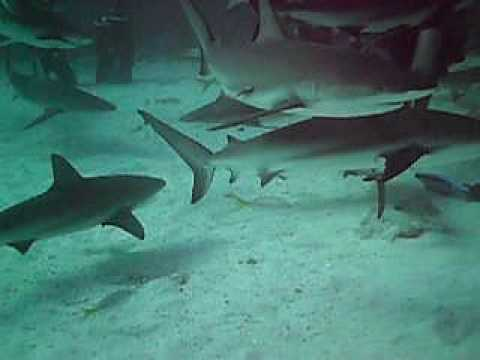 Shark Dive - Bahamas - 12-12-2009
