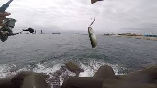 Рыбалка на море с берега.лакедра в конце видео