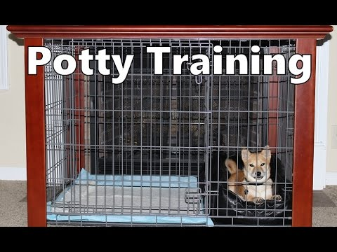 How To Potty Train A Shiba Inu Puppy House Training Tips Puppies