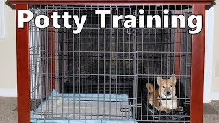 How To Potty Train A Shiba Inu Puppy - Shiba Inu House Training Tips - Shiba Inu Puppies