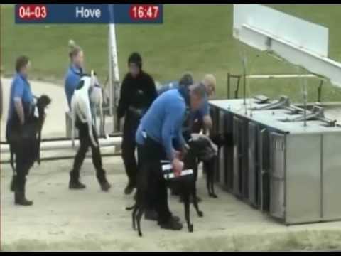 Armchair Piemiss destroyed at Brighton and Hove greyhound stadium