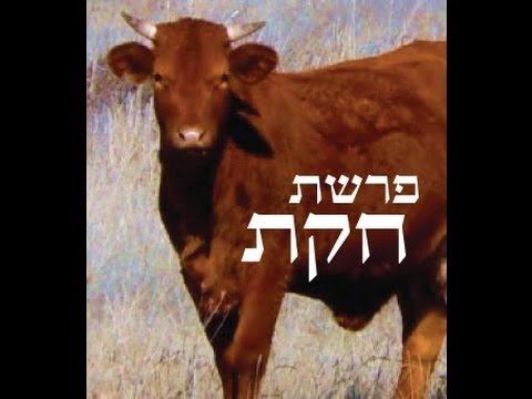 שיחת חיזוק (14) בטלפון (פרשת חקת, האם התורה עדיין רלוונטית לדור שלנו?) בתכנית TorahMates