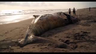 Encuentran ballena muerta en Chiapas