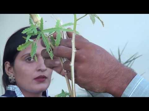 How to grow vegetable (kitchen garden) in urdu
