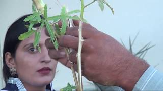 How to grow vegetable (kitchen garden) in urdu