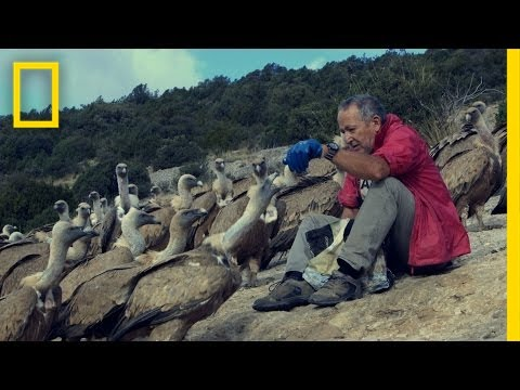 The Vultures This Man Loves May Soon Disappear | National Geographic