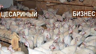 Фермер Кирилл Жданов: Почему я решил заниматься разведением цесарки