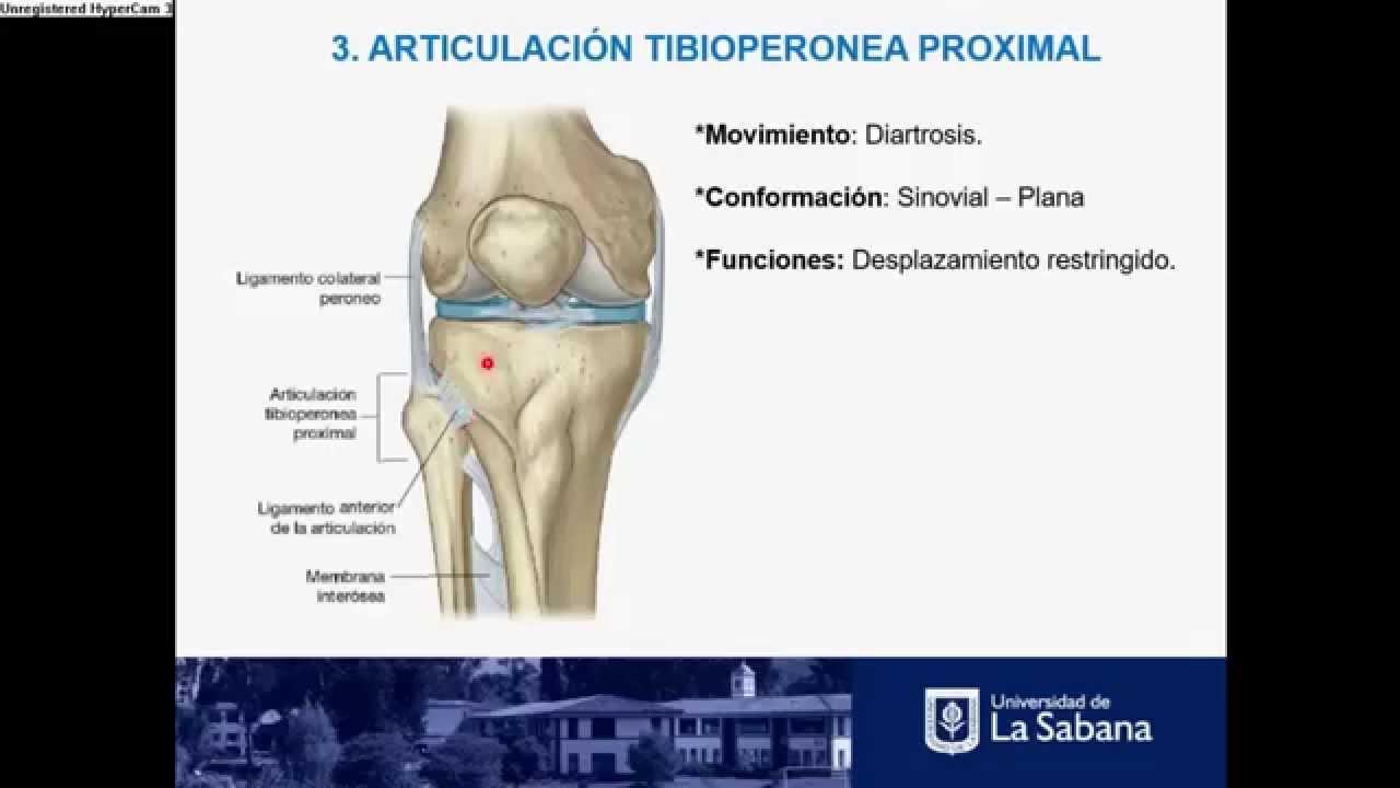 Articulación Tibioperonea proximal e interósea. - YouTube