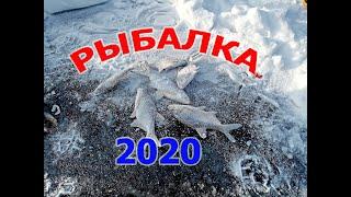 Пошли на речку опохмелиться, решили закормить лунку и такое началось. Рыбалка 1 января 2020