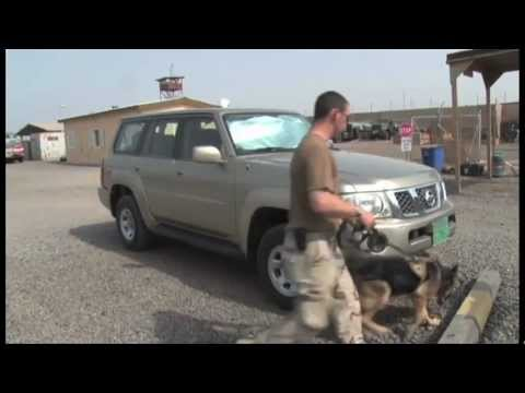 K9 Military Working Dogs training on PATROL and DETECTION