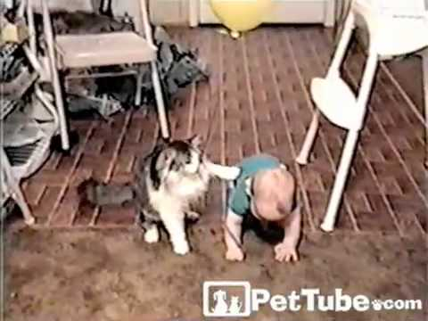 Cat Wants Baby's Balloon- PetTube