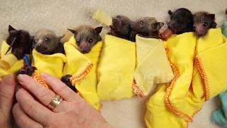 Introducing... Baby Bat Burritos - an Adorable Outfit for Bats