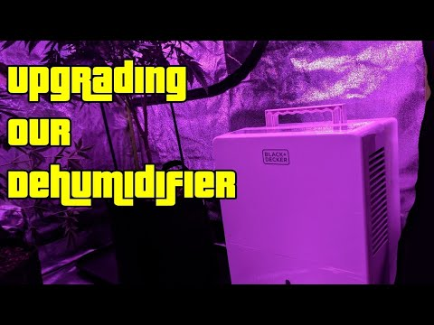 Dehumidifier in a Grow Tent (Upgrading our Flowering Tent) & Dehumidifier in a Grow Tent (Upgrading our Flowering Tent) - YouTube