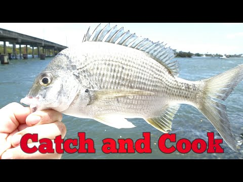 Catch and Cook Bream | Hope Island