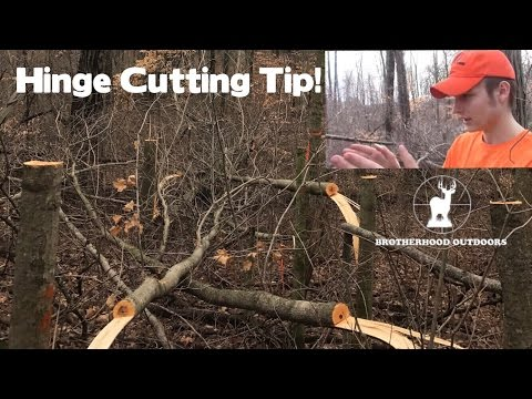 Habitat Talk: Why You Should Hinge Cut Your Property Lines! || Hold More Deer! ||