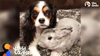 Sick Dog Gets Support from Bunny Best Friend - LOLA & PEPPER | The Dodo Odd Couples