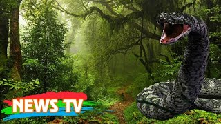 Hair-raising truth about giant snakes in Vietnam